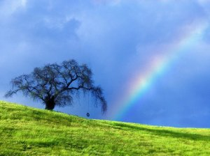 Rainbow_in_a_field_Wallpaper_nn8ux