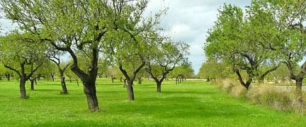 olive-trees-517437__180