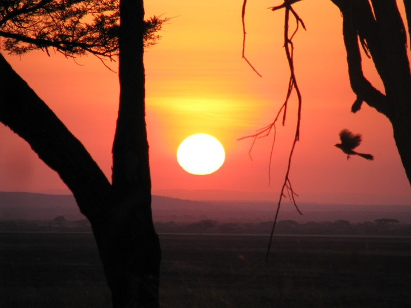 african_sunrise_by_spectresabre