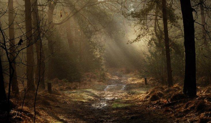 light_on_a_dark_path_by_jchanders