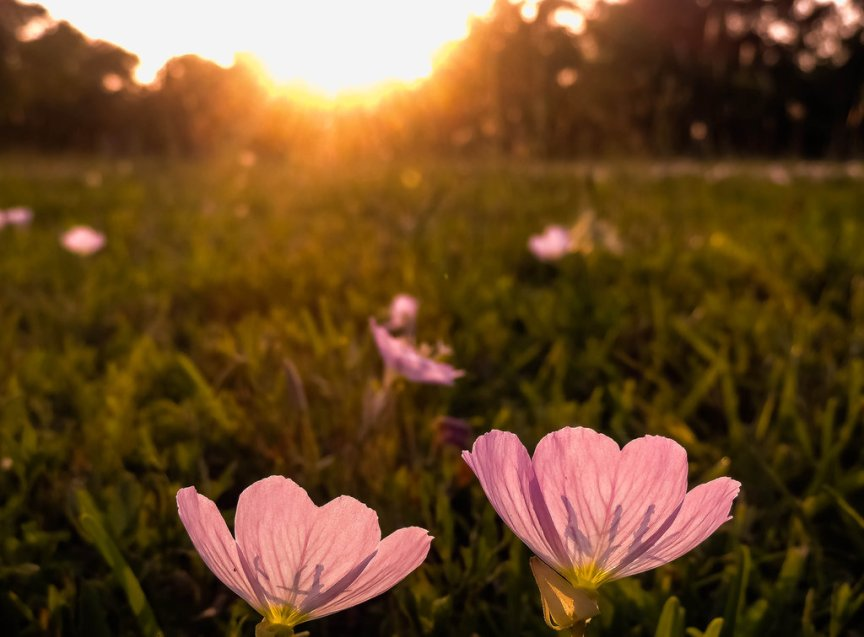 flora_s_secret_iii_by_novaheroi-d672eaj