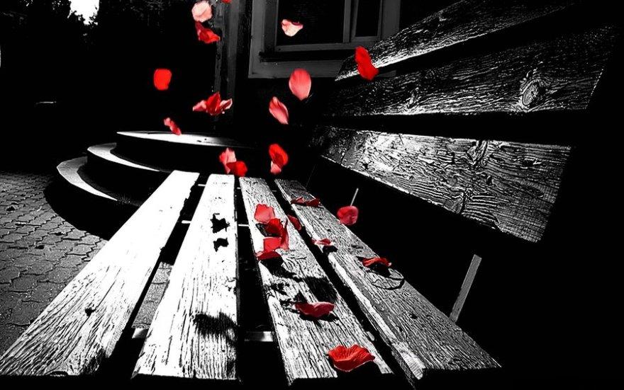 rose_petals_by_fort_o-d37mv6j
