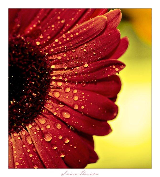 summer_rain_by_designbysterling