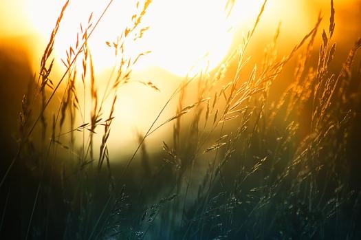 summer_sun_by_robinhedberg-d57gbqx.jpg