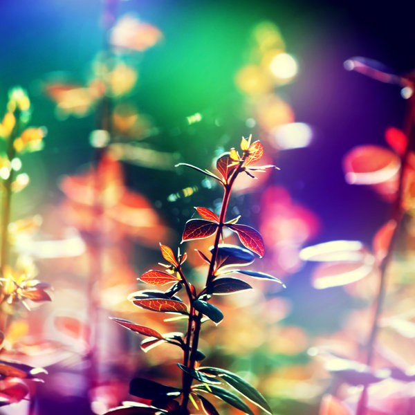 i_dreamed_a_dream____by_incolor16-d5bh301.jpg