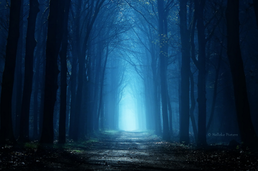 follow_the_light_by_nelleke-d8j384f.png